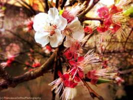 Blossom by FrancescaDelfino