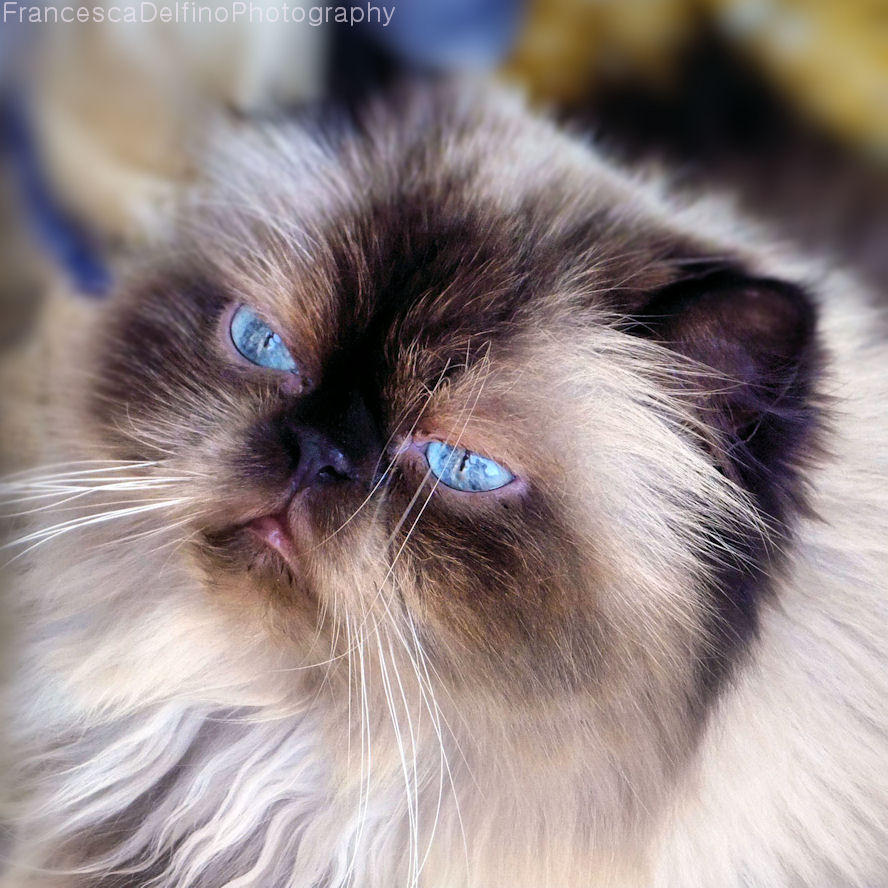 Her beautiful blue eyes by FrancescaDelfino