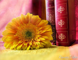Flower and book .perfect harmonies. by FrancescaDelfino