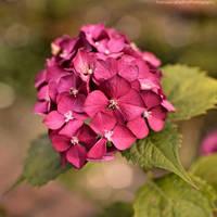 Tiny pink flowers 2 by FrancescaDelfino