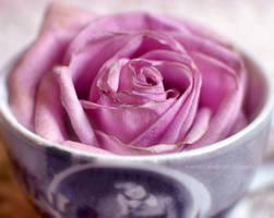 Cup of rose by FrancescaDelfino