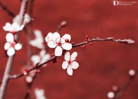 Spring 2014 II by FrancescaDelfino