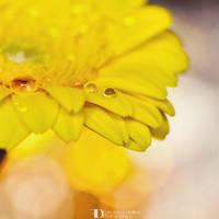 Yellow like the sun by FrancescaDelfino