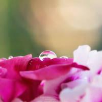 77. Little Waterdrop by FrancescaDelfino