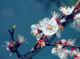 Spring 2018 by FrancescaDelfino