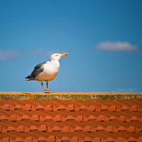 Seagull I by FrancescaDelfino