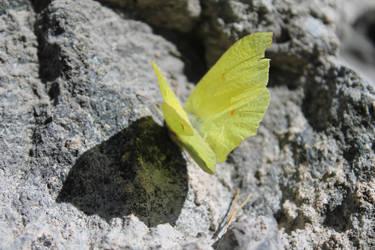 Butterfly by lyaxx