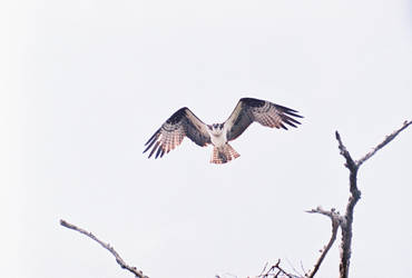Landin by eGuidry