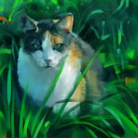 Cat Study by simoneferriero