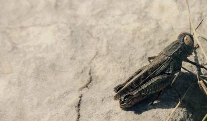Grasshopper by Sarush09