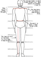 Body Proportions Tutorial by crazy-fae