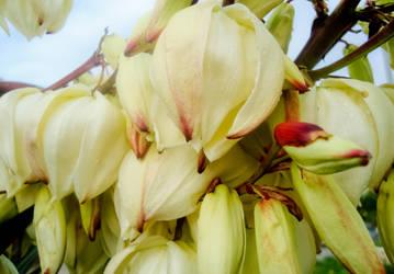 Lots of Flowers by Sonia-Rebelo