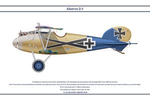 Albatros DV Jasta 77b 1 by WS-Clave