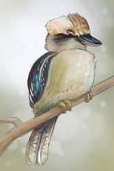 Laughing Kookaburra by Speedyrulez