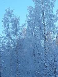 Frosty morning by BeastOfEuthanasia