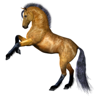 Horse 4 PNG by Variety-Stock
