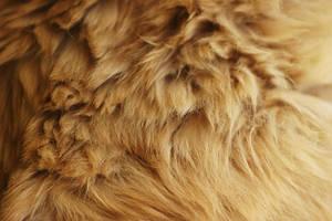 Fur 1 by lostandtaken
