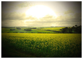 Fields of Yellow by Aukon