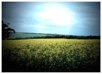 Fields of Yellow II by Aukon