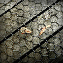 Trapped by Aukon