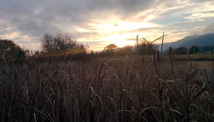 Cattail Sunset by mothepro