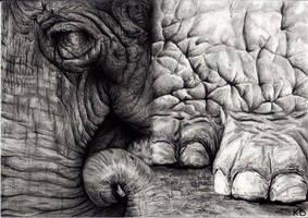 old elephant... by SitaraGirl