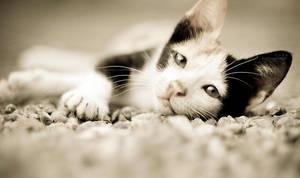 resting by HMsa