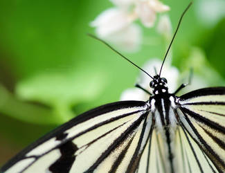 Butterfly Time by HMsa