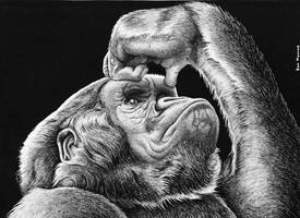 Gorilla Thoughts in Art Pen by ronmonroe