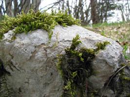 Moss rocks by Darknight-Stock