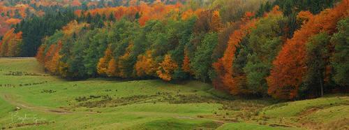 Autumn limits... by BogdanEpure
