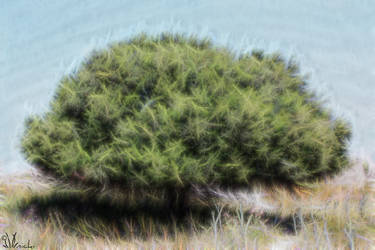 A tree in Greece by Xiandre