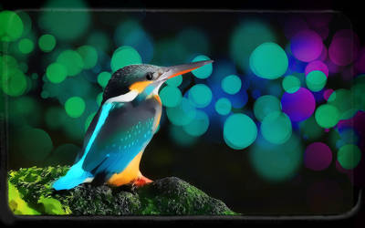 Kingfisher by arnarn-stinkfist