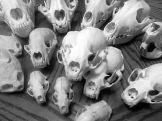 Animal Skulls for Sale! by Anacita