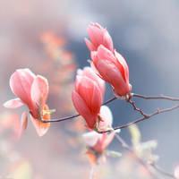 Spring by kirawinter