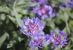 flowers again by DieCooleSocke