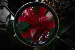 Lens by DianaShadoweye