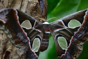 Awaking Moth by DianaShadoweye