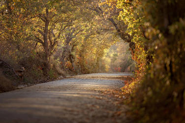 Country Roads 3 by lisablevins