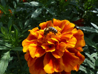 FlowerBee by MiffArte