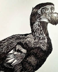 Dodo Bird (Inktober) by BenitoDLR