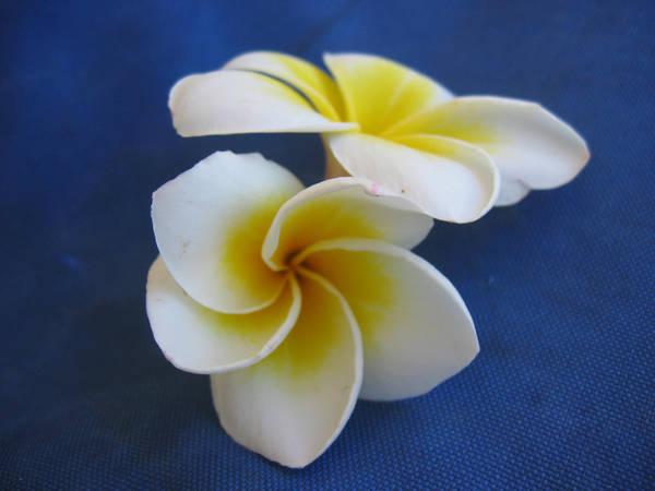 Fleur Ile Maurice By C4mille On Deviantart