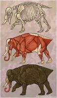 R. rugus anatomy by Quisum