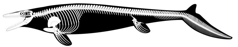Mosasaurus hoffmannii Reconstruction (UPDATED) by PWNZ3R-Dragon
