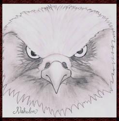 A Predator's Portrait by Nahelon
