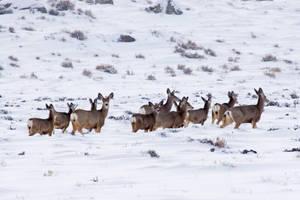 Pinedale Deer by Nestor2k