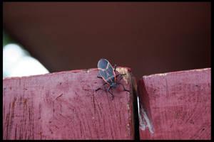 Fence Beetle by Nestor2k