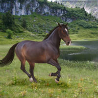 HEE Horse Avatar 4 by TrueBlueNature