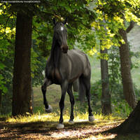 HEE Black Forrest by TrueBlueNature