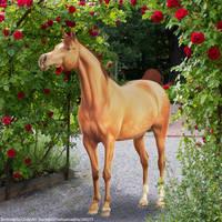 HEE Apricot Arab by TrueBlueNature